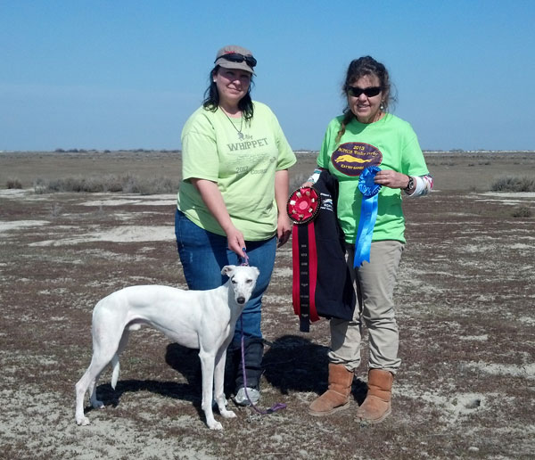 Chili getting Best of Breed at the Grand Course 2013