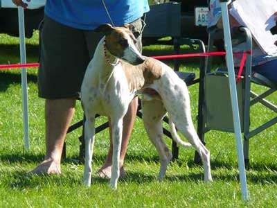 My handsome Dude, September 2009 at the NAWRA National fun match.  Photo courtesy of Beth Levine.