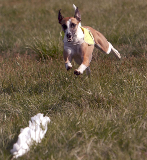 Zinger lure coursing